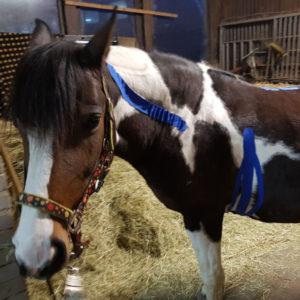 Taping von Pferden und Hunden