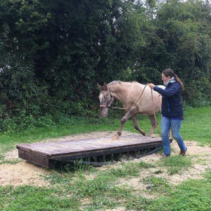 Geschicktlichkeit mit Pferd